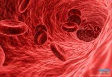 สารตรวจค่าเลือด - Ferritin