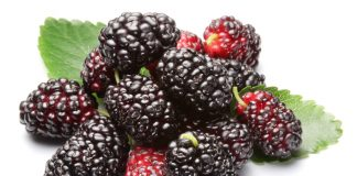 สารอาหารมหัศจรรย์ในมัลเบอร์รี่ (Mulberry)
