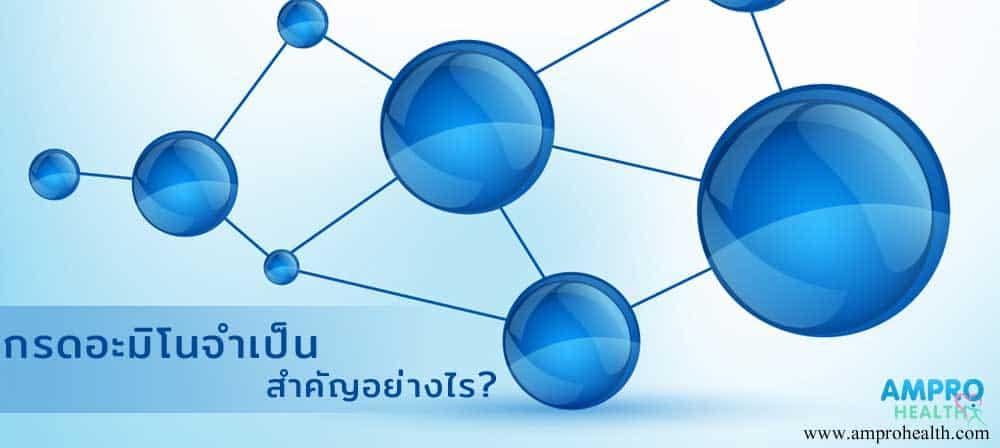 กรดอะมิโนจำเป็น สำคัญอย่างไร ? (Amino Acids)