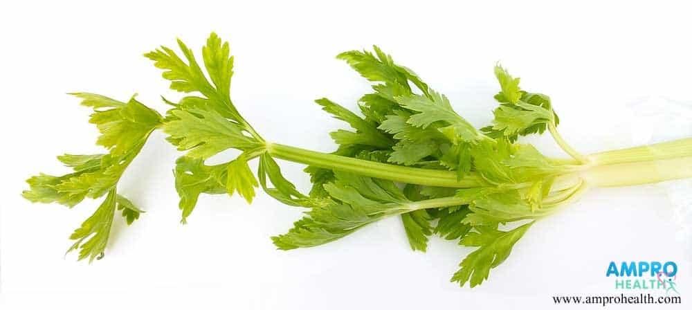 ผักเซเลอรี่ (Celery) คืออะไร