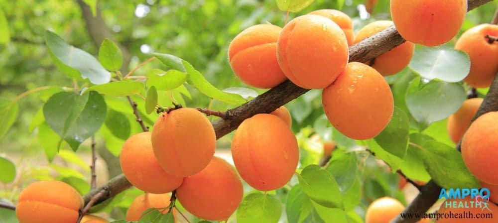 ประโยชน์ของแอปริคอต (Apricots)