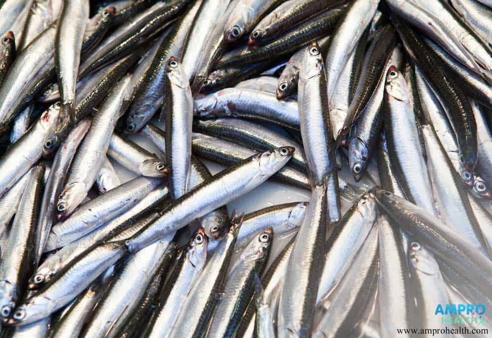 ประโยชน์และสรรพคุณของปลากะตักหรือปลาฉิ้งฉ้าง (Anchovy)