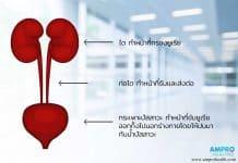 การตรวจปัสสาวะหาค่า Urine Urea N