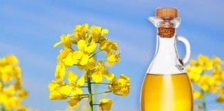 ประโยชน์ของน้ำมันคาโนลา (Canola Oil)