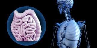 ลำไส้และจิตใจกำหนดพลังภูมิคุ้มกันที่ใหญ่สุดในร่างกาย