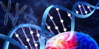 พันธุกรรมกับอัลไซเมอร์ (Genetics of Alzheimer Disease)