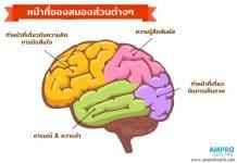 ความสำคัญสมองกับความจำ