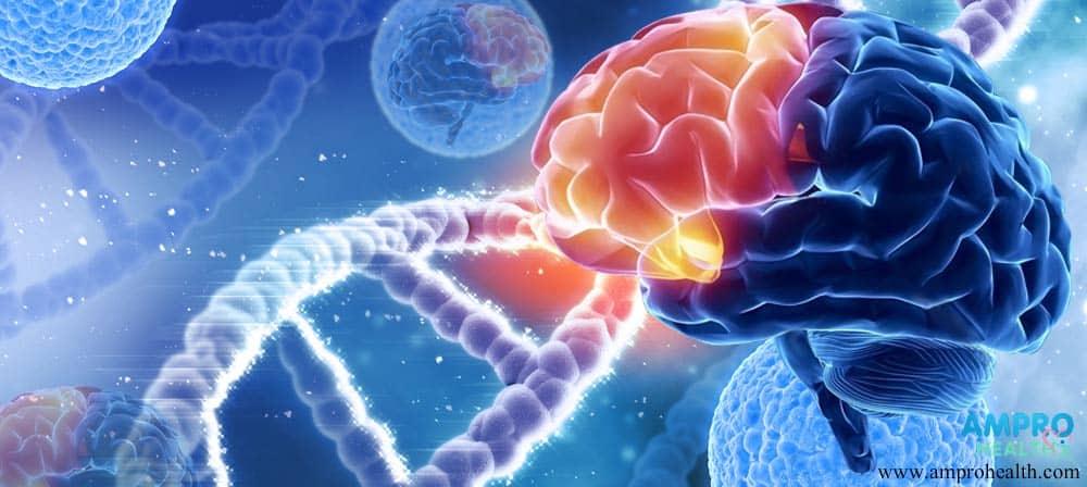 ความสำคัญของสมองกับความจำ