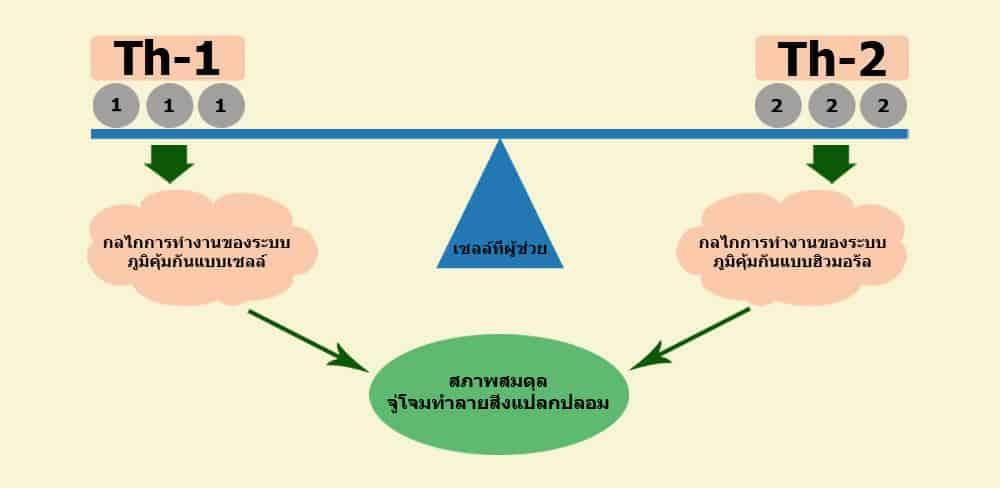 แผนภูมิรูปภาพแสดงการทำงานของระบบภูมิคุ้มกัน
