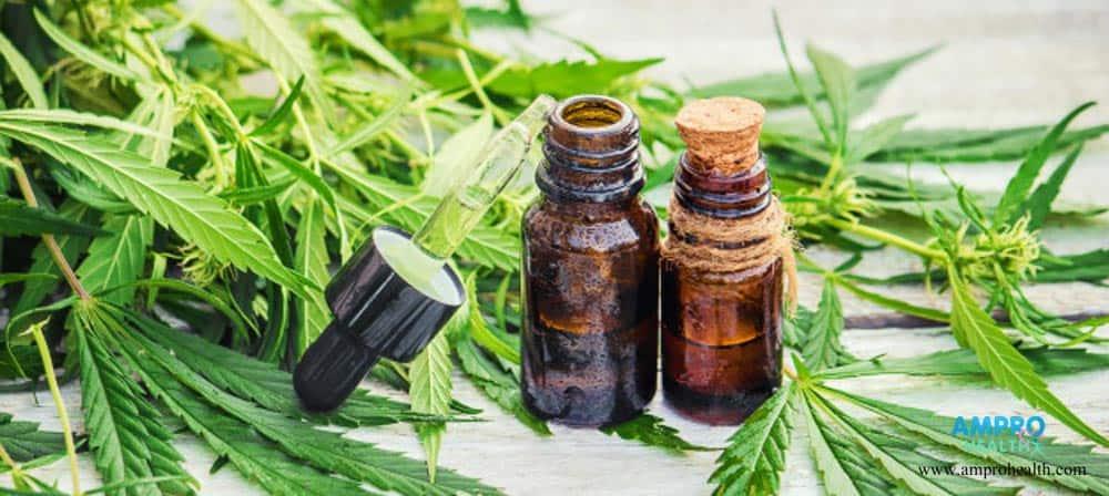 กัญชา ( Marijuana ) สมุนไพรทางเลือก