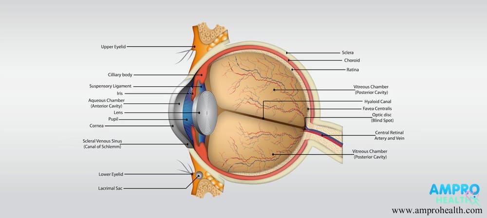 กระจกตาอักเสบ ( Keratitis )