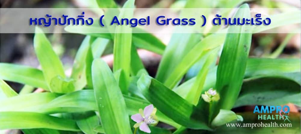หญ้าปักกิ่ง ( Angel Grass ) ต้านมะเร็งได้ ?