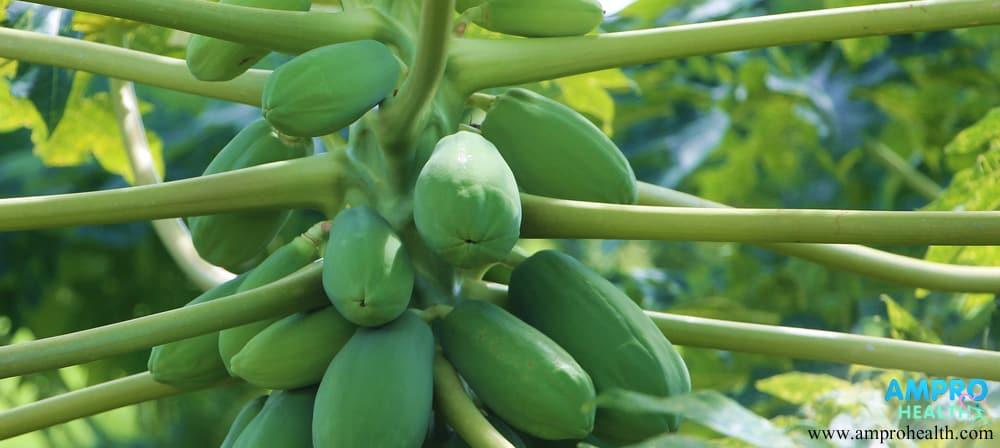 มะละกอ ผลไม้ลดน้ำหนัก และดีต่อการขับถ่าย