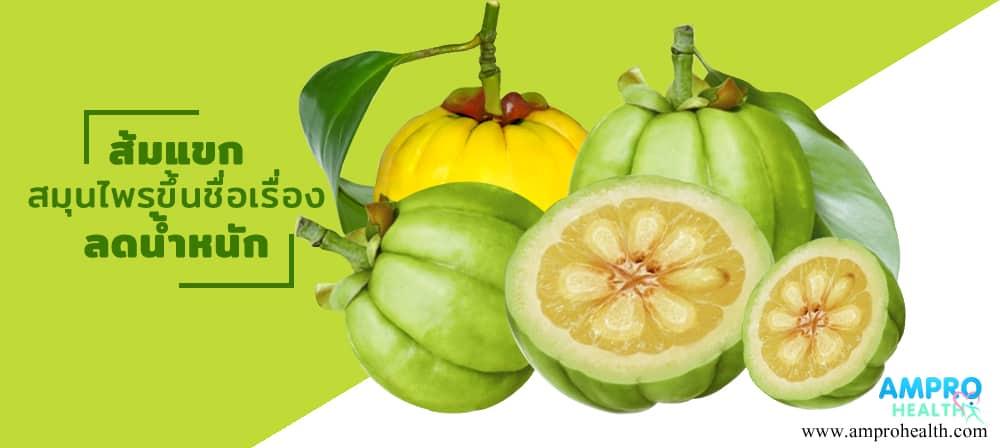 ส้มแขก สมุนไพรขึ้นชื่อเรื่องลดน้ำหนัก