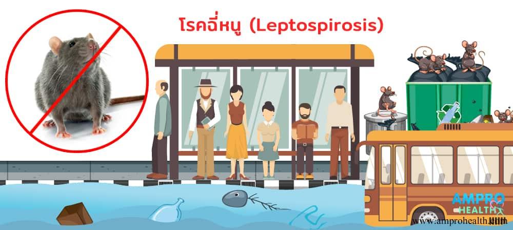 โรคฉี่หนู ( Leptospirosis ) อันตรายที่มากับหน้าฝน