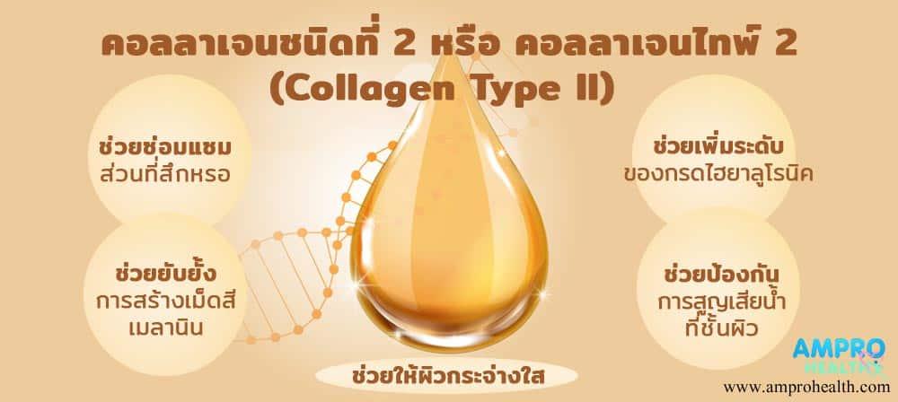 คอลลาเจนไทพ์ทู ( Collagen Type II ) มีประโยชน์อย่างไร