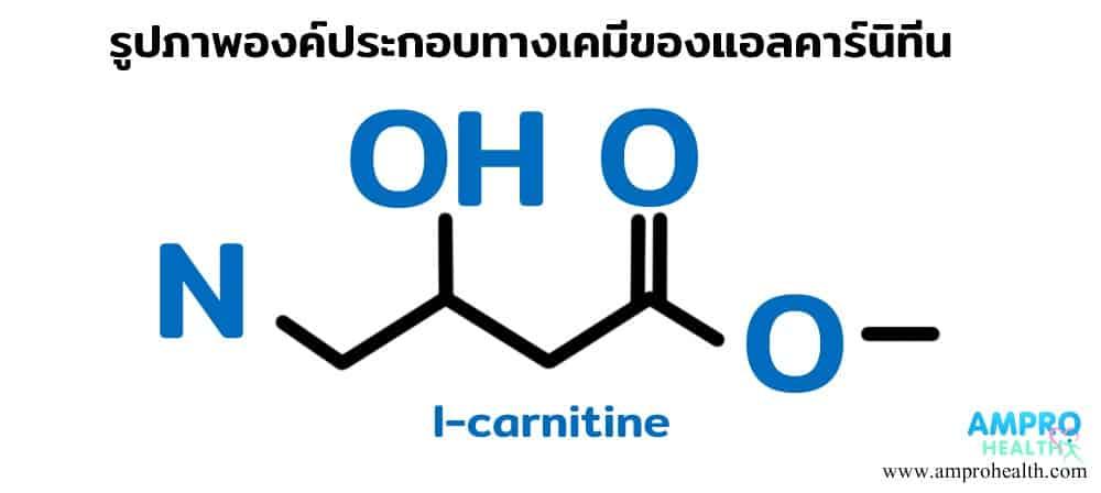 แอลคาร์นิทีน ( L- Carnitine ) มีประโยชน์อย่างไร