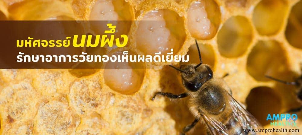 มหัศจรรย์นมผึ้ง รักษาอาการวัยทองเห็นผลดีเยี่ยม