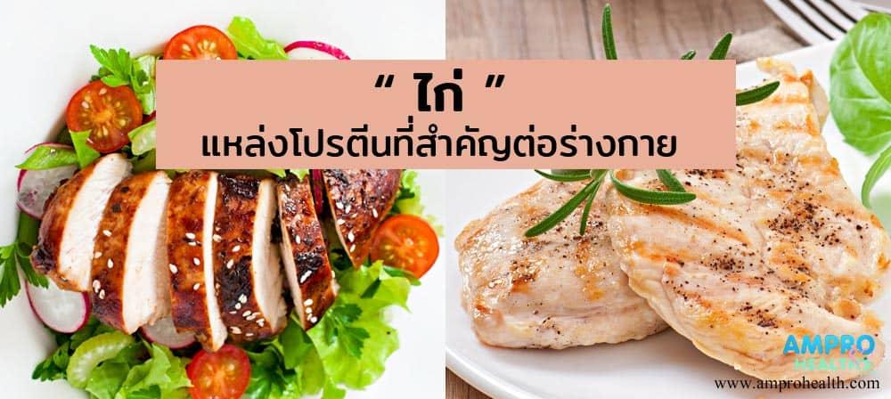ไก่ แหล่งโปรตีนที่สำคัญต่อร่างกาย