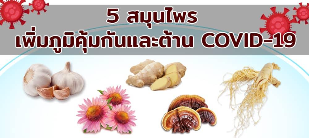 5 สมุนไพร เพิ่มภูมิคุ้มกันและต้าน COVID-19