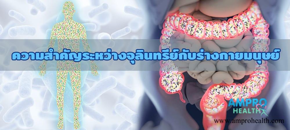 ความสำคัญระหว่างจุลินทรีย์กับร่างกายมนุษย์